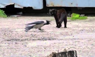 Кошеня і ворон