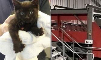 Кошеня потрапив в промисловий подрібнювач і не постраждав