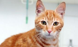 Кошеня синдбад плив з єгипту до британії 17 днів без їжі і води