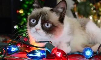 Котики-меми представили в голливуде різдвяне відео зі своєю участю