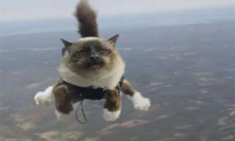 Коти-парашутисти