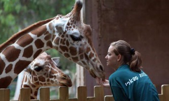Ковчег для жирафів