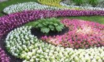 Килимові рослини