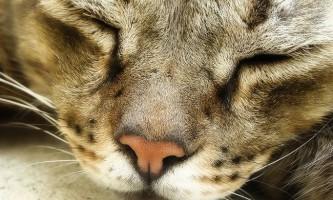 Шкірні захворювання у кішок - фото і лікування