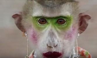 Краса & шоу: талановита мавпа