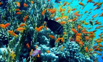 Красу підводного світу червоного моря