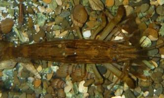 Креветки в природі