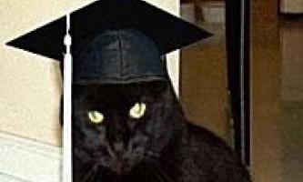 Кримінальна історія з дипломованим котом