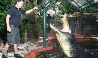 Крокодил на прізвисько кассіус - найбільший крокодил з усіх що живуть в неволі.