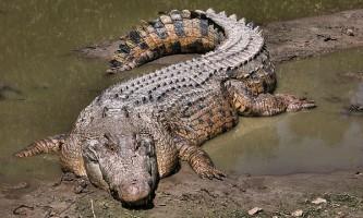 Крокодили опинилися відмінними віндсёрфінгістамі