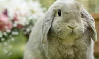 Кролик в будинку - море радості і веселощів