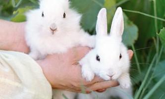 Кролики розведення, бізнес план