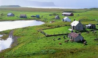 Кролики серйозно ускладнюють життя на шотландському острові канна