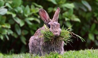 Кролики: все про носіях цінного хутра