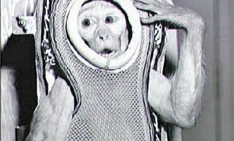 Кроша - мавпа-космонавт