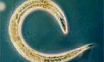 Круглих черв`яків явно недооцінювали