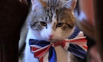 Хто буде платити за головного кота даунинг-стріт