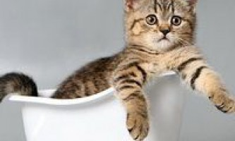 Купання кішок