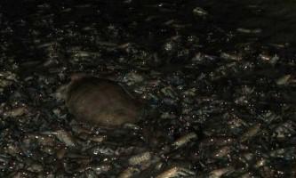 Купер-крик (cooper creek) - пересихає річка