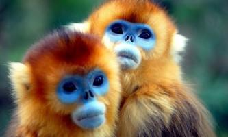 Кирпоноса мавпа! Хто кирпатий всіх на світі?