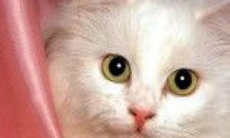 Лікування і причини алергії у кішок