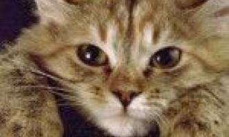 Лікування котячих паразитів - глистів