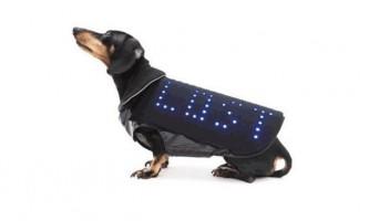Led-плащ допоможе собаці повернутися до господаря