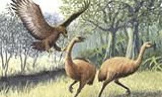 Легендарна птах-людоїд дійсно існувала