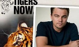 Леонардо ді капріо посприяв збільшенню популяції диких тигрів