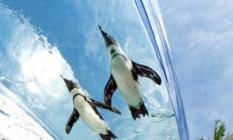 Літаючі пінгвіни в токійському sunshine aquarium