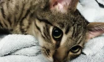 Лишай від кішки у людини - симптоми і лікування