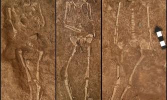 Лисиці, можливо, заміняли древнім людям собак
