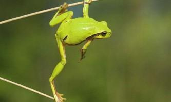 Жаби: види, опис, фото
