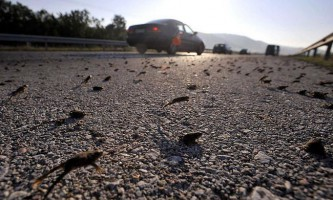 Жаби заблокували грецьке шосе