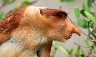 Цікавість і активне спілкування згубно впливають на здоров`я приматів