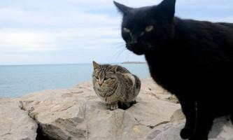 Люди кидають чорних котів через їх нефотогенічна