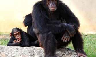 Люди і мавпи не схильні до альтруїзму