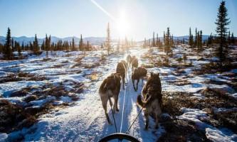 Люди використовують собак як їздових тварин вже не перше тисячоліття
