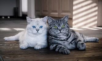 Люди в світі кішок, або хто ми для наших кішок