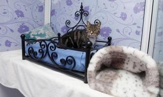 Люксові готелі для кішок