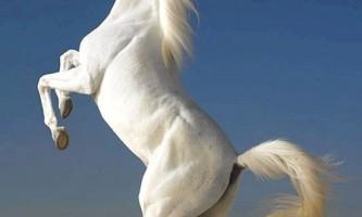 Кінь - вірний друг людини
