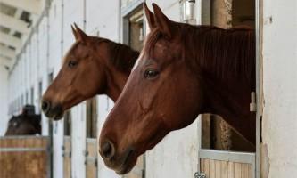 Коні можуть спілкуватися з людьми за допомогою картинок