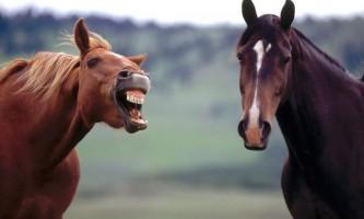 Коні висловлюють деякі емоції як люди
