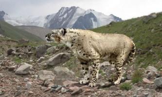 Спритність і маневреність гепарда робить його винятковим мисливцем