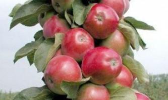 Кращі клоновідние сорти яблунь для підмосков`я