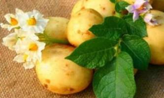 Кращі представники ранньої картоплі