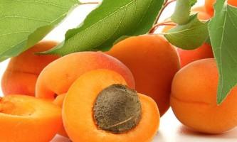 Кращі сорти абрикосів