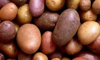 Кращі сорти ранньої картоплі