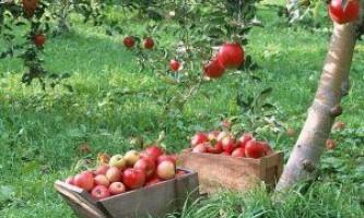 Кращі поради по правильному догляду за садом восени