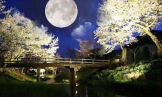 Місячний календар садівника-городника